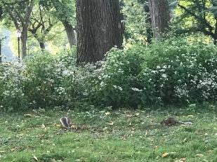 profesorjonk-nueva-york-central-park-ardillas-relatos-de-viajes_6