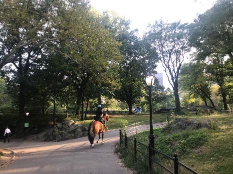 profesorjonk-nuevayork-centralpark-relatos-de-viajes_5